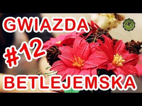 Kwiatki z bibuły 12 gwiazda betlejemska