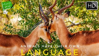 ANIMALS HAVE THEIR OWN LANGUAGE (Miracle of The Quran)