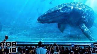 Top 10 Extinct Animals We Shouldn
