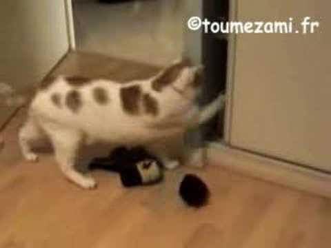 Le chat fou vide l armoire Crazy cat