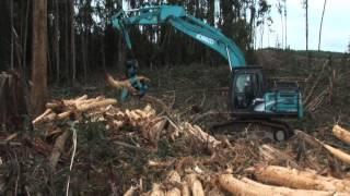 Pembangunan Hutan Tanaman Industri Indonesia (part 1)
