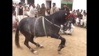 gora intzar dance gujrat pakistan hourse dance