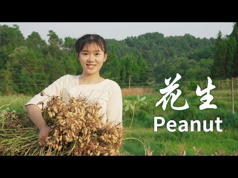 花生是藏在土里的美味,自己做一块花生糖,甜在回忆里 Peanut is hidden in the soil of the delicious 杨大碗