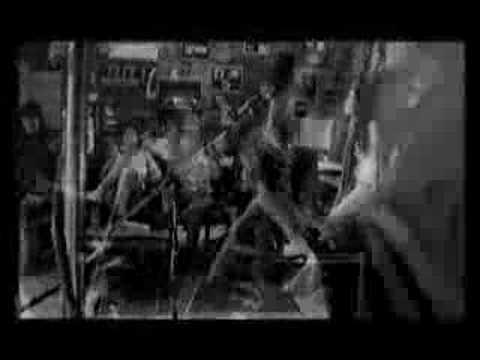A.N.I.M.A.L. - Combativo