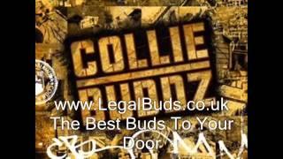 Collie Buddz - Young Girl