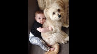 Dogs never fail to make you happy and smile - Dog and Baby Videos 2017