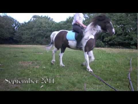 Xxx Mp4 One Year Later My Horse 3gp Sex