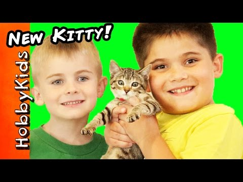 We Got A NEW Kitty Cat Toy Surprise Egg Play. Cat Rescue Family Fun HobbyKidsTV