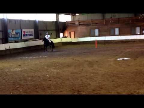 Matt Van Der Horst and Dorothy - Brumby Challenge 2013/14