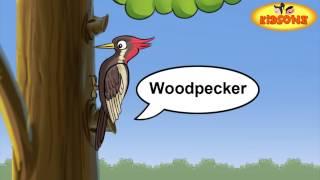 Various Birds On Earth || Birds Activities