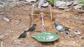 DIY Bird Trap-How To Make DIY Simple Bird Trap