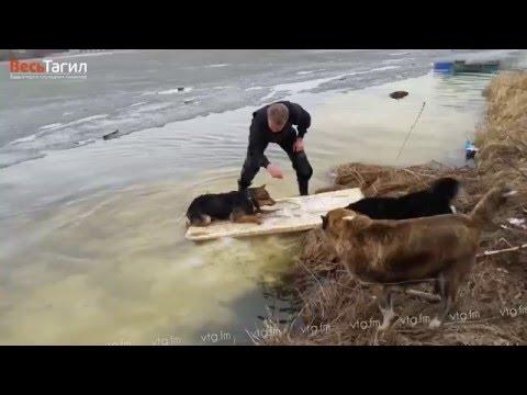 Xxx Mp4 Спасение собаки на тагильском пруду 3gp Sex