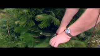 Emerald Trees - Corporate 1