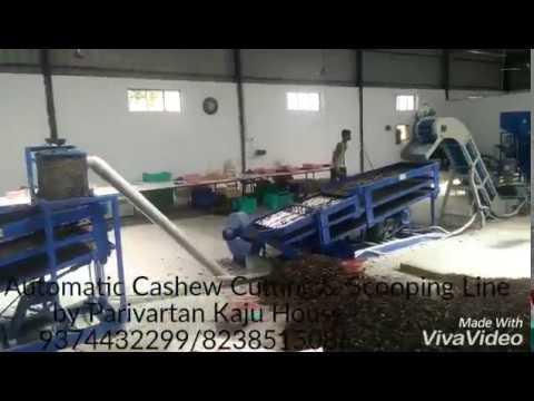 Xxx Mp4 Automatic Cashew Cutting Scooping Line By Parivartan Kaju House Surat 3gp Sex