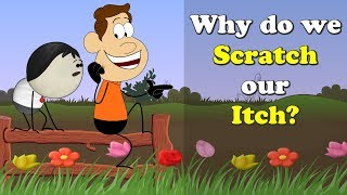 Why do we Scratch our Itch? | #aumsum #kids #education