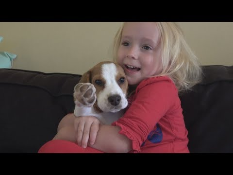 Puppyhood is much better with a child : Puppy Lilly and Baby Laura