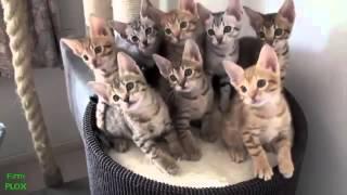 أفضل فيديو مضحك للحيوانات