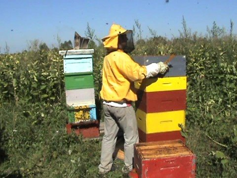 honey bees pčelarenje bez rešetke prvi dio