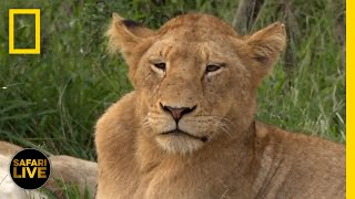 Safari Live - Day 133   National Geographic