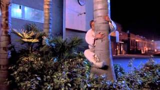 Beverly Hills Ninja Palm tree scene