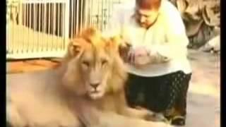 Lion Whisperer Pet Lions  Pet Lion Pakistan Must Watch!!!