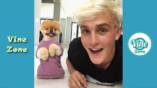 Funny Jake Paul Instagram Videos - Vine Zone✔