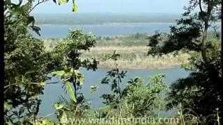 Imagine the jungle book at Pench National Park, Madhya Pradesh