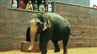 Jodhaa Akbar hrithik roshan fiting with elephant
