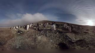 Walk with Penguins in immersive 3D experience