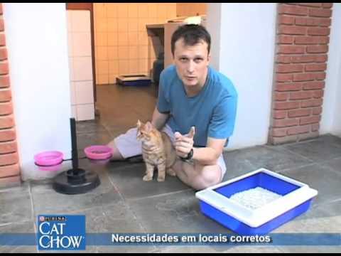 Ensine o seu gato o lugar certo de fazer as suas necessidades.