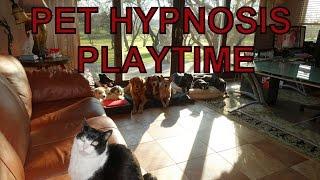 DOG HYPNOSIS PLAYTIME