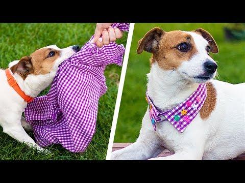 13 Cute Dog Hacks Paw sitively Creative DIY Crafts
