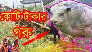 Bangla Funny Video । কোটি টাকার গরু । New Video 2017 । Mojar Tv