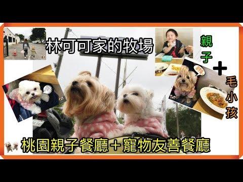 【桃園親子餐廳+寵物友善餐廳】龍潭林可可家的牧場。跟著毛小孩一起吃喝玩樂吧!Taoyuan pet friendly restaurant  LinokokRanch