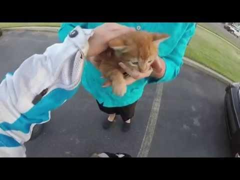 I sound stupid, but I saved a kitten.