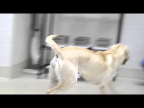 Xxx Mp4 XX Files The Smell Test The Working Dog Center CLIP 3gp Sex
