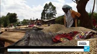 Kenya : le changement climatique menace sérieusement le café