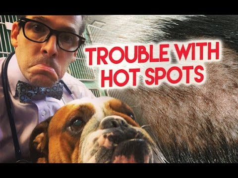 Xxx Mp4 Does Your Dog Have A Hot Spot The Bow Tie Vet Guy Helps 3gp Sex