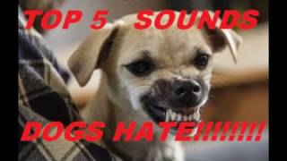 5 SOUNDS DOGS HATE ALL TIME