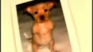 FAITH - The Two-Legged Wonder Dog!