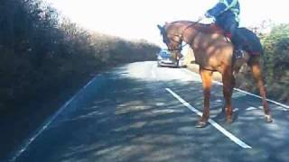 Spooked Horse