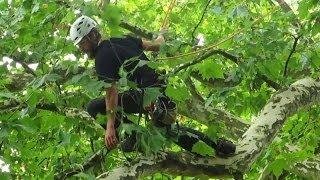 9th Swiss Treeclimbing Championship 2014