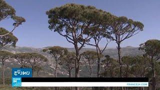 رأس المتن بجبل لبنان.. لغابات الصنوبر حكاياتها!