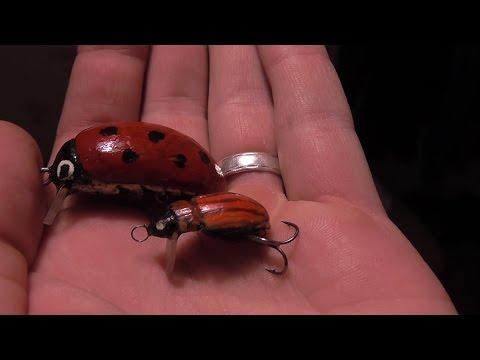 что можно ловить на личинку майского жука