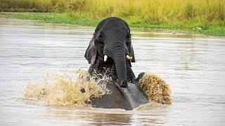 Funny Elephants (NEW) (HD) [Funny Pets]