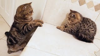 Kitten meets his Brother for the first time! **CUTENESS OVERLOAD**