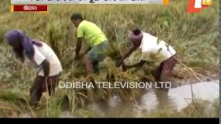 Evening Round Up 16 Nov 2017 | Odisha News Update - OTV