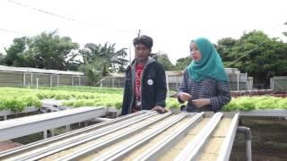 Dokumenter cara menanam sayuran dengan metode hidroponik