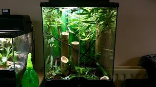 HOW TO SETUP A BIOACTIVE MANTIS ENCLOSURE (BAMBOO FOREST AND ORCHID)