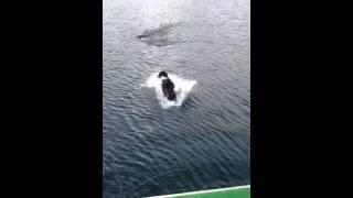 Rafa dock jumping Dec 8 2012
